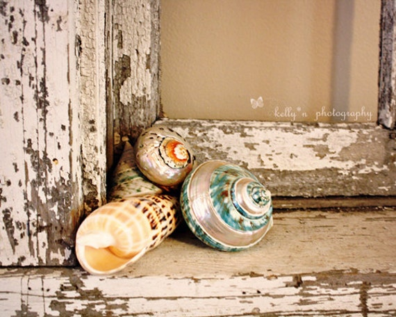 Window Shells- Colorful Seashells-Weathered Windowsill-Shabby Chic-Beach Cottage-8x10 Fine Art Print