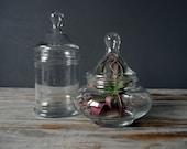 Glass Apothecary Drop Jar
