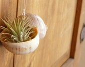Decorative Air Fern Shell - Gift or Wedding Favor