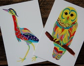 Postcard set bright bird illustration  2 sided card