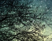 Large Size Wall Art Starry Sky. Fine Art Photograph 24x36 Surreal abstract home decor. tree branches stars blue