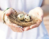 Nest Photography Print - Nature Photography - Wall Art - Wall Decor - Home Decor - Fine Art Photography - White - Easter Decor - Eggs