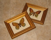 Pair Vintage Wood Framed BUTTERFLY Pictures-Prints-Gold-Black Speckled Painted Wooden Frame