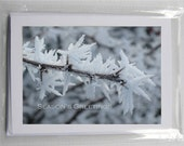 Blank Photo Holiday Cards (set of 5): Frost - Season's Greetings