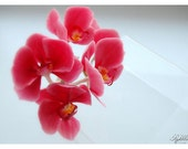 Branch of orchid  Phalaenopsis for wedding hairstyles