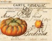 FRENCH Post Card Warty Pumkins  period   Original design archival print  5x7 inch.