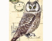 Vintage OWL  French Carte Postale archival print