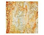 Labyrinthian Origins, Limited edition Fine Art Photograph