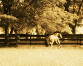 Photograph, Fine Art, Equestrian 8x8 sepia toned, signed print. Titled: Turned Out