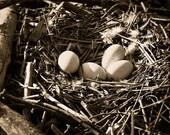 Photograph, Fine Art, Goose Nest 8x8 signed print. Titled: Mother Goose
