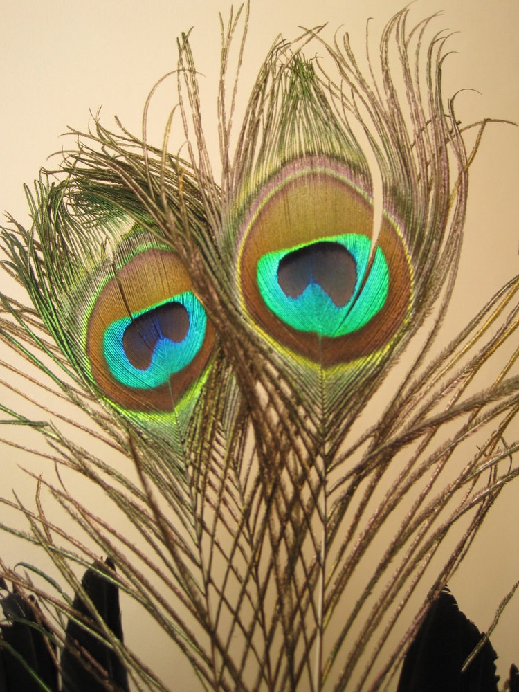 Feathered Extravagant Voodoo Headdress By Halfshellproductions
