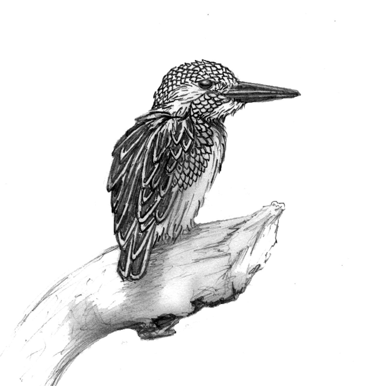 Kingfisher Greeting Card Blank