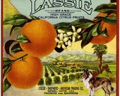 The Marshall Canyon Collection - Lassie Collie Shepherd  Dog Orange Citrus Fruit Crate Box Label Art Print