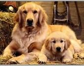 4 Dog Puppy Golden Retriever  Greeting Notecards/ Envelopes Set
