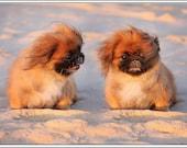 4 Dog Puppy Pekingese Greeting Notecards/ Envelopes Set