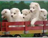 Pack of 4 Dog Puppy Samoyed Greeting Notecards/ Envelopes Set