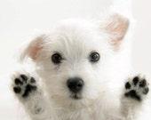 4 Dog Puppy West Highland Terrier Greeting Notecards/ Envelopes Set