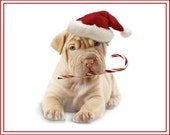 4 Dog Puppy Sharpei Christmas Greeting Notecards/ Envelopes Set