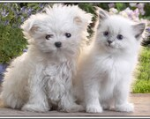 4 Dog Puppy Cat Kitten Maltese Siamese Greeting Notecards/ Envelopes Set