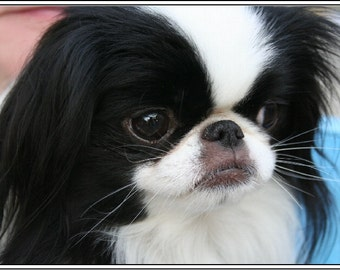 4 Dog Puppy Japanese Chin Greeting Notecards/ Envelopes Set