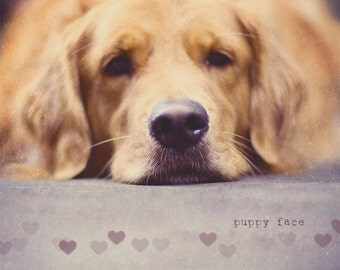 Dog Lovers Gift, Golden Retriever Art, Dog Lover, Dog Gift, Dog Art, Dog Photo, Dog Print, Cute And Cuddly, Gift Idea, Puppy Face