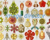 Shells Corals IMAGE Download 6 Beautiful Colorful Ocean Sea Life Sea Star Home Decor Print to Frame