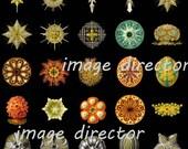Antique 1899 CORALS IMAGE Download 10 Beautiful Ocean Sea Nature Colored Shells Corals Seashells Ocean Sea Jellyfish Nature Natural Science