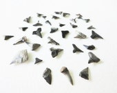 Miniature real authentic SHARK TEETH fossils from Peace River Florida lot 34 pcs