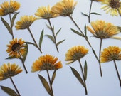 Marigold Flowers Pressed Dried Calendula Officinalis