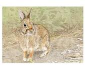 Rabbit Card printed from Original Watercolor
