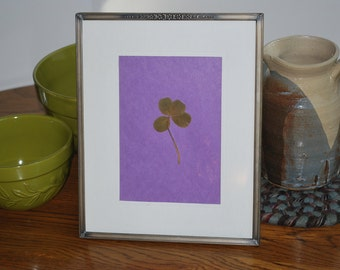 Lucky Irish Real Four Leaf Clover in Vintage Silver Frame 8x10