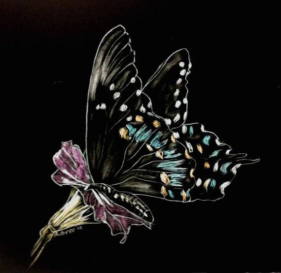 Butterfly scratchboard - photo#4