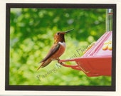 Humming Bird Male - Rufous - Photo Card - Bird Photo Card