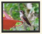 Humming Bird Female - Rufous - Bird Photo Card