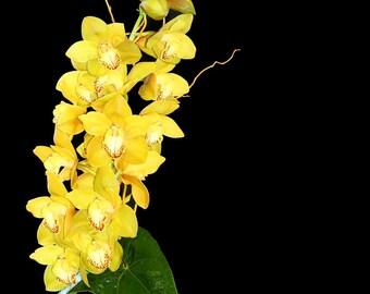 Recreate this Fresh Yellow Exotic Cymbidium Orchid Arrangement, in Permanent Botanicals  High End Silk Flowers, Event Design