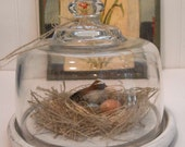 Glass Cloche with Spring Bird Nest - Twine Nest - Nature - Home Decor