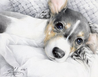 "ORIGINAL - A cute dog drawing in colored pencil "" Looky""  7"" x 8"" (18cm x 20cm)"