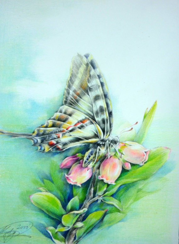 Items Similar To ORIGINAL Butterfly Landing On Flowers