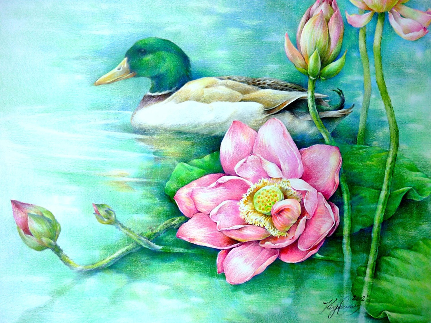 Lotus Flowers and a Duck Origianal Colored Pencil by ...  Lotus Flowers a...