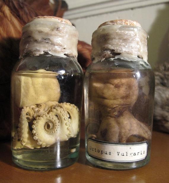 Baby Octopus in Specimen Jar