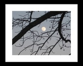 Chestnut Moon