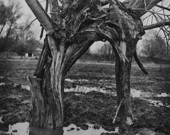 old tree, fine-art black and white photography, landscape with  tree