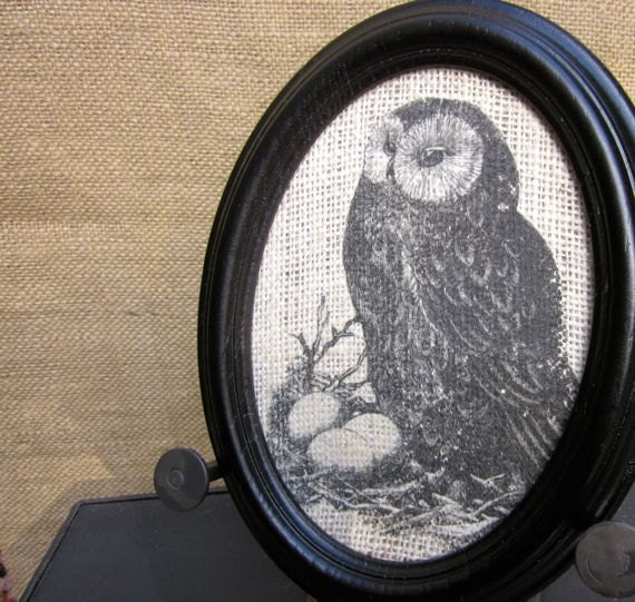Owl Picture Black Oval Frame