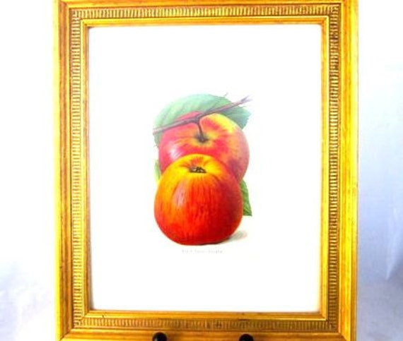 Antique Book Plate Print Framed Red Apples Art Picture Framed Picture