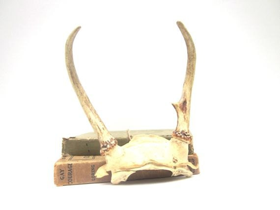 Vintage Antlers Deer  Horns Nature Home Decor