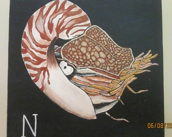 N is for Nautilus.