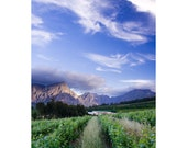 Banhoek Valley South Africa view one 10x7 Fine Art Photo