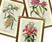 Flowers Orchids Prints, vintage french 1750 illustrations  printed on upcycled  dictionary page, Set of 3 prints, Upcycled book page