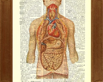 Anatomy of Intra-abdominal and Thoracic Organs Print  vintage  illustration printed on old dictionary page