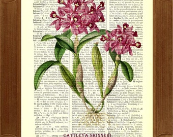 Orchid flower Dictionary Art Print, vintage illustration upcycled dictionary page  upcycled book page art print